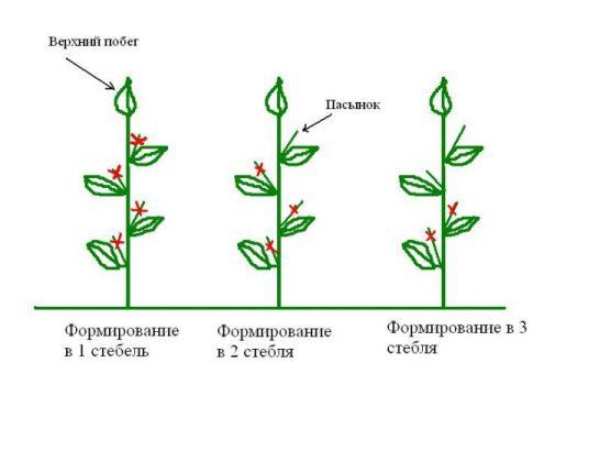 Формирование огурцов в открытом грунте