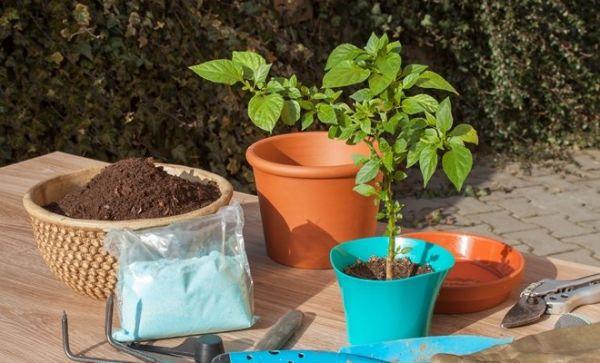 7 овощей, которые можно выращивать в контейнерах