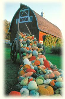 Хранение свежих фруктов и овощей