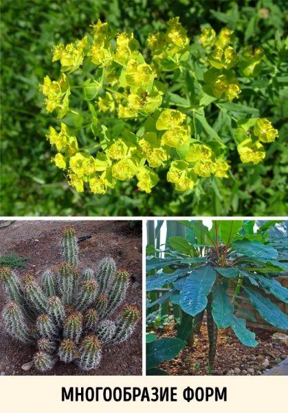 Самые ядовитые растения в мире