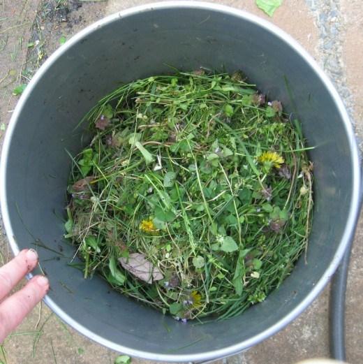 Хочу поделиться своим опытом изготовления удобрений из сорняков