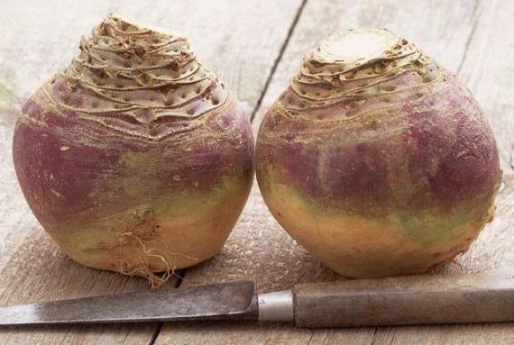 Репа - несправедливо забытый корнеплод