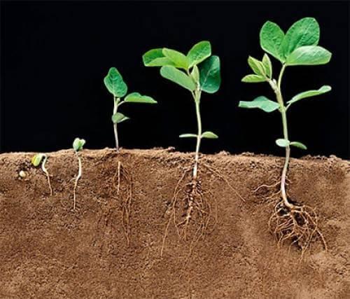 Эффективные стимуляторы для формирования корней