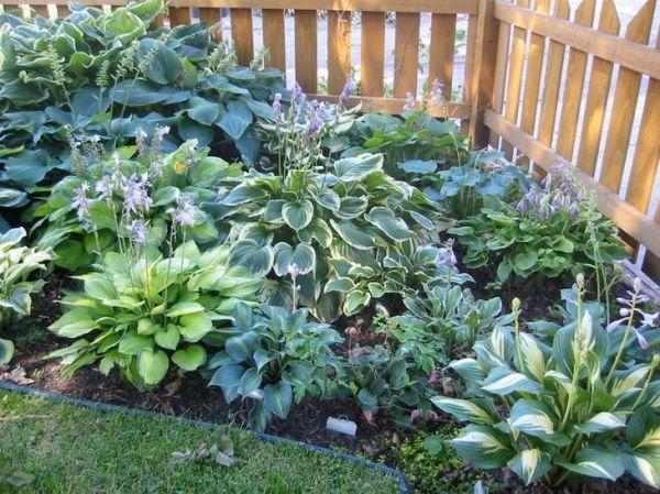 Удивительные растения для вашего сада