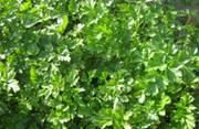 маленькие хитрости садоводов и огородников