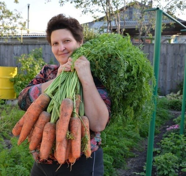 Готовы к такому урожаю? Нужно сеять морковь следующим образом