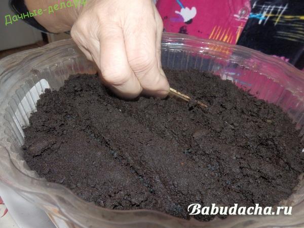 Выращивание репчатого лука из семян (рассадой). Наш эксперимент!