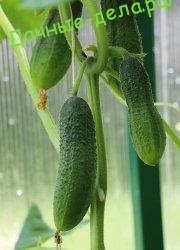 Как заготовить собственные семена
