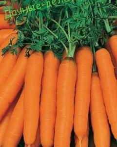 Длинноплодные сорта моркови 17