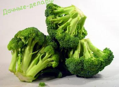 Как правильно выращивать брокколи 7