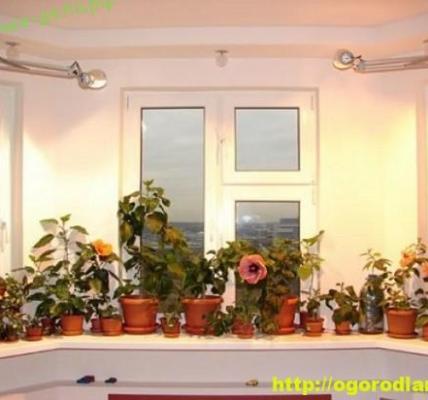 Растения для теплых восточных и западных комнат 8