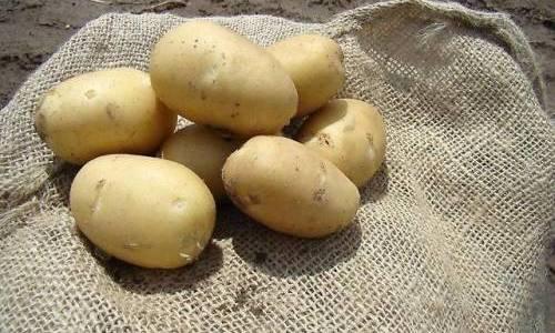 7 признаков качественного семенного картофеля 16