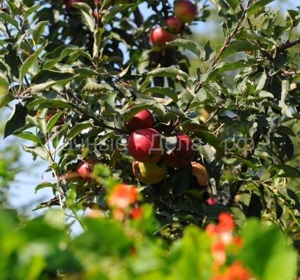 Российские садоводы требуют у Минсельхоза ввести запрет на импорт фруктов 11