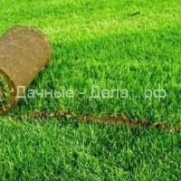Рулонный газон: преимущества, технология укладки