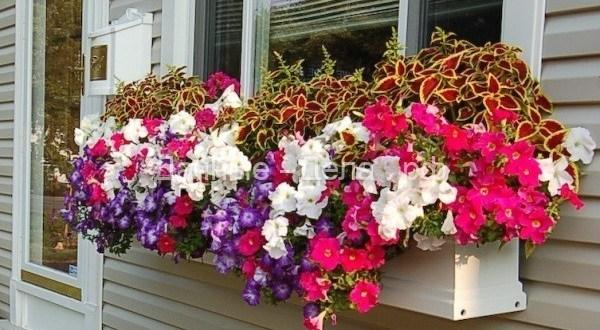 Цветочная композиция для балкона