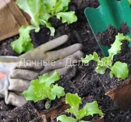 Загодя готовим грунт. Какие ингредиенты входят в состав почвы под рассаду 4