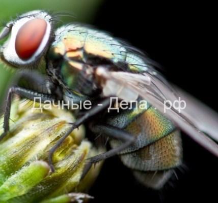 Избавляемся от мух в доме 3