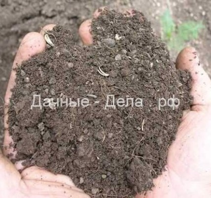 Андрей Туманов: земля для рассады – залог урожая 6