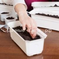 Когда высевать семена на рассаду – вычисляем оптимальные сроки