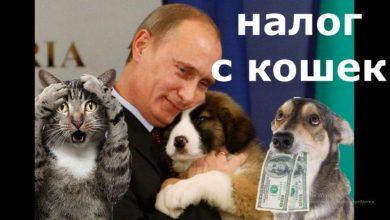 налог с кошек
