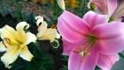 31 Пэзия в цветах