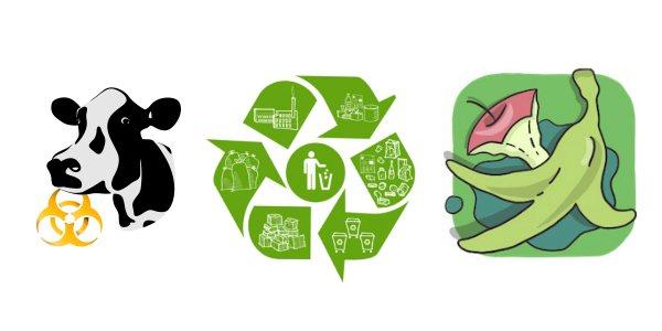 биологические отходы пищевые отходы