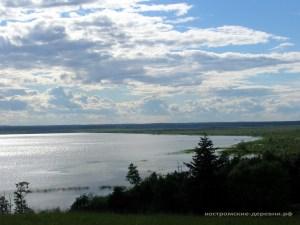 Чухломское озеро. Заболоченное побережье.