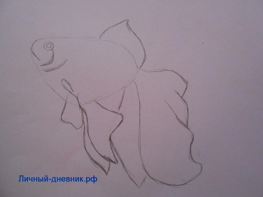Nakreslete tužku zlaté rybky ve fázích pro začátečníky