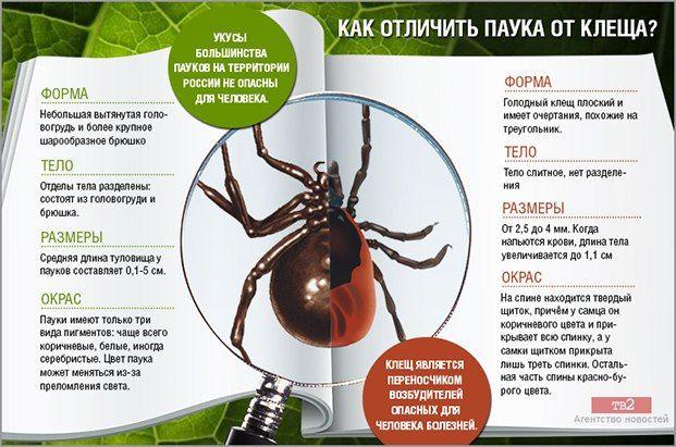 Эффективная обработка от клещей в Жуковском. Цены