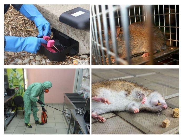 Служба по уничтожению крыс и мышей