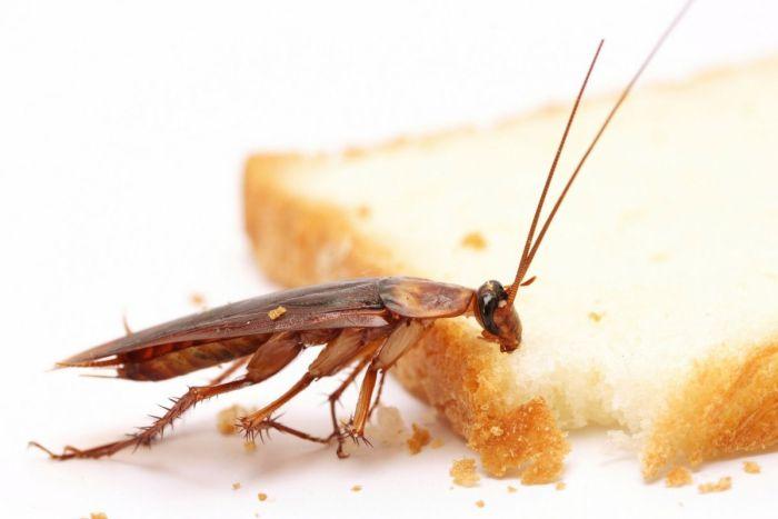 Качественная дезинсекция от тараканов в Щербинке. Цены