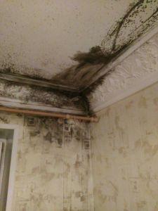 Плесень на потолке, что делать и как убрать
