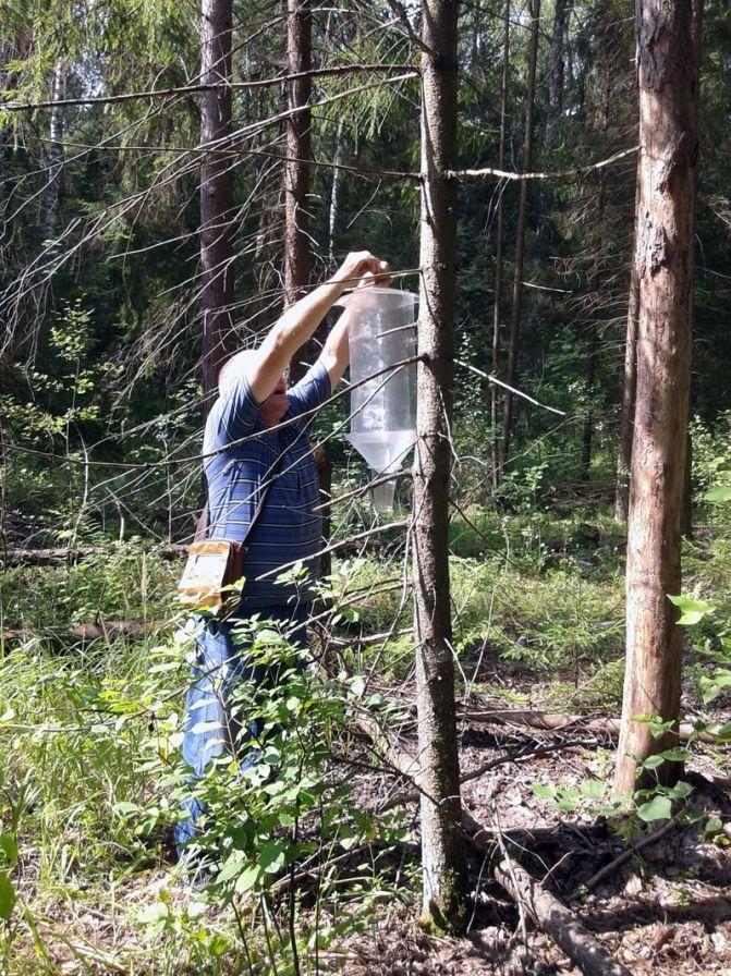 избавиться от жука короеда в деревянном доме