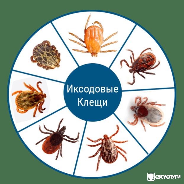Обработка от клещей в Московской области (Подмосковье). Цены