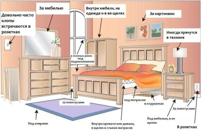 Уничтожение клопов в квартире специализированная служба с гарантией