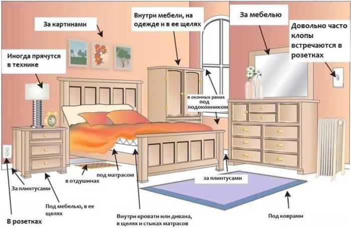 Уничтожение клопов в Москве и Московской области