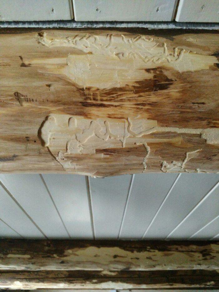 Жуки в срубе, досках, бревнах деревянного дома