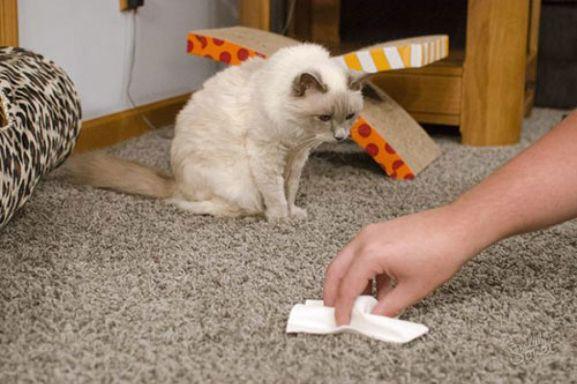 Удаление запаха кошки с мебели в квартире
