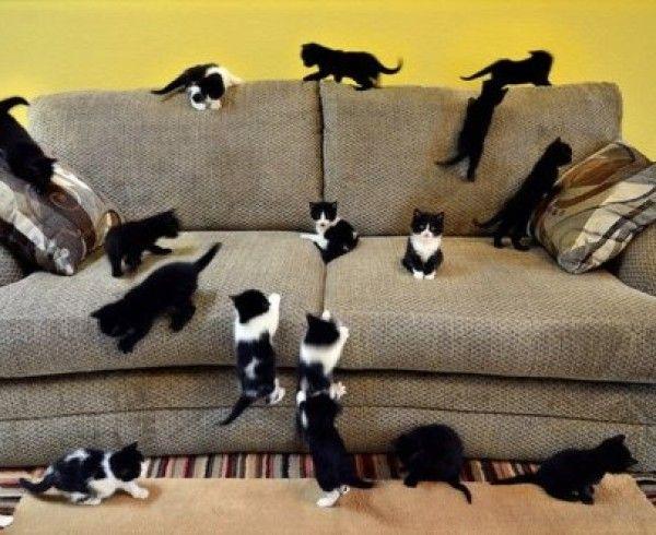 Удаление запаха кошки с мебели