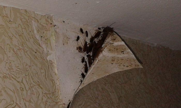 Дезинфекция от тараканов в Балашихе