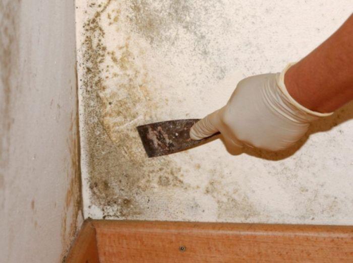 Как победить плесень на стенах в квартирах