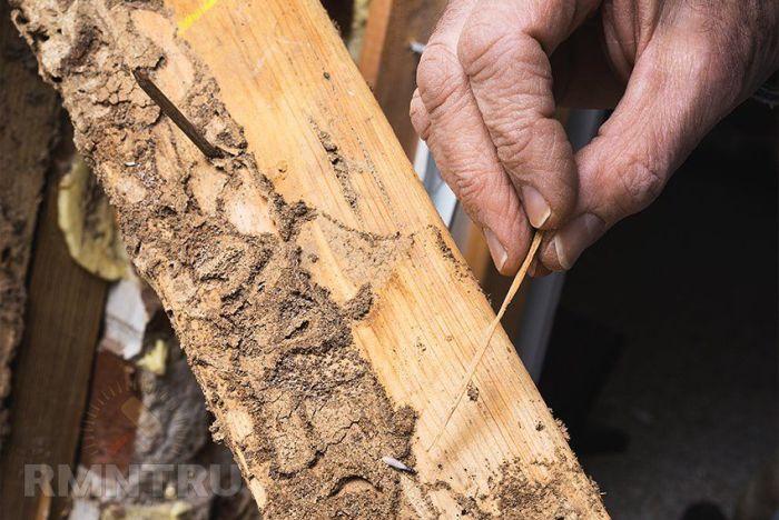 Как избавиться от жука короеда в деревянном доме