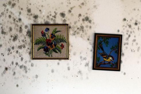 Удаление плесени в комнате с стен навсегда
