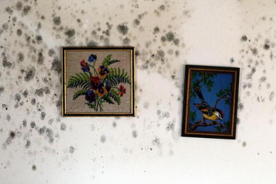 Как избавиться от плесени на стене в квартире?