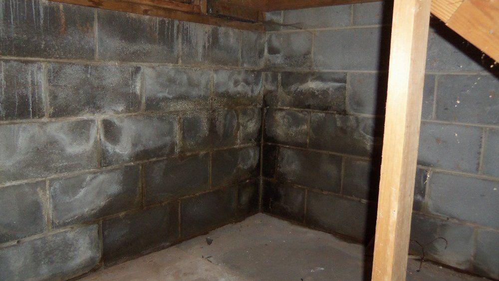 Белая пушистая плесень и грибок в подвале, погребе на стенах устранение Дезцентр-Русь