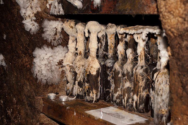 Белая плесень или гриб мухор подробнее. Как удаляют специалисты