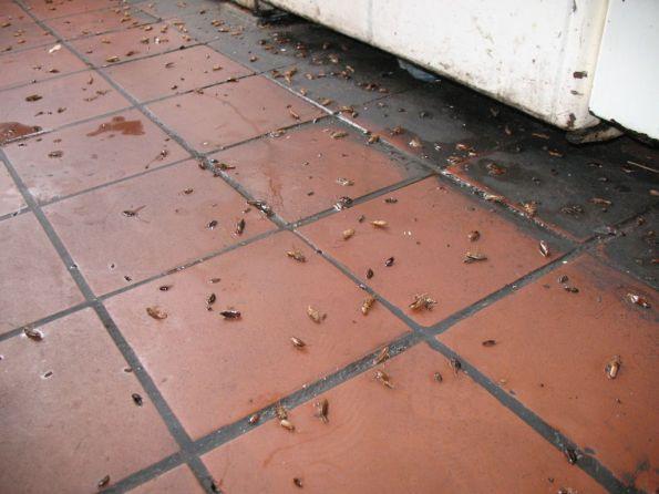 Как вывести тараканов из квартиры навсегда. Цены