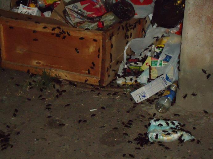 Действенная дезинсекция от тараканов в Раменском районе
