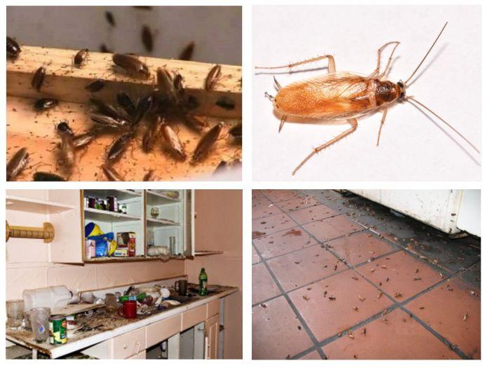 дезинфекция от тараканов в Подольске