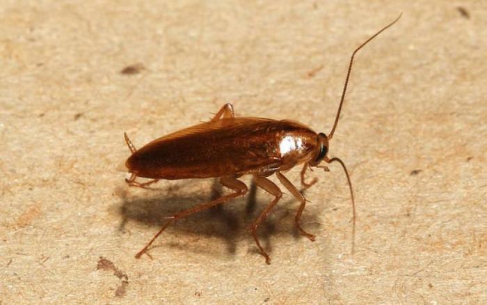 Травля тараканов в Жуковском